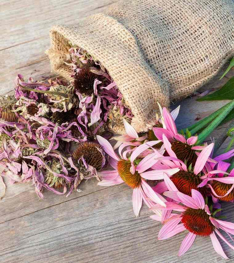 productos naturales flor equinacea