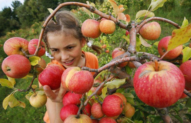 propiedades de la manzana consumo