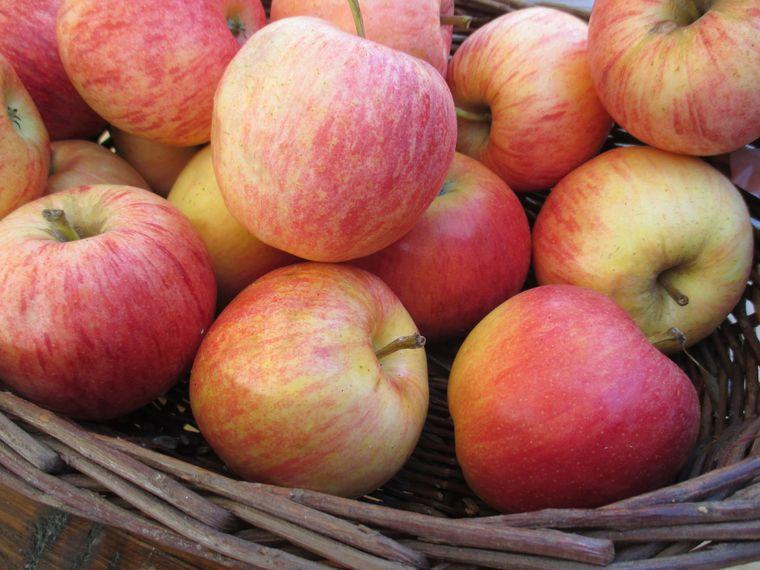 propiedades de la manzana funcion intestinal