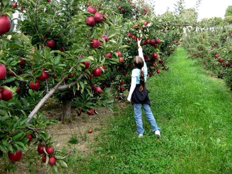propiedades de la manzana salud