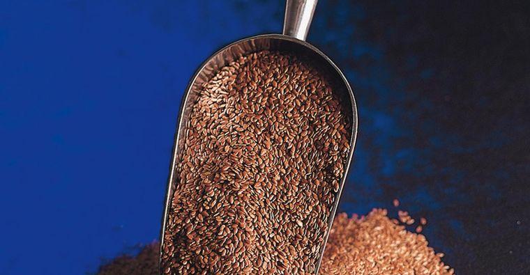 semillas de linaza lino