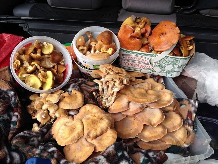 suplementos-alimenticios-beneficios-hongos