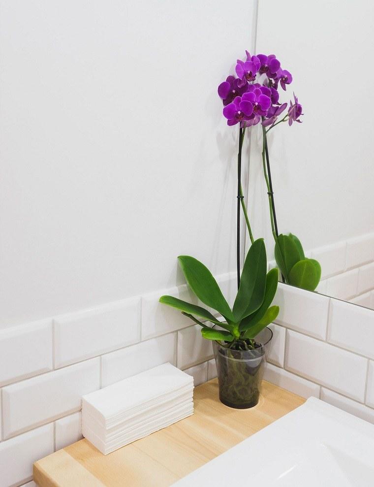 bano-opciones-flor-orquideas