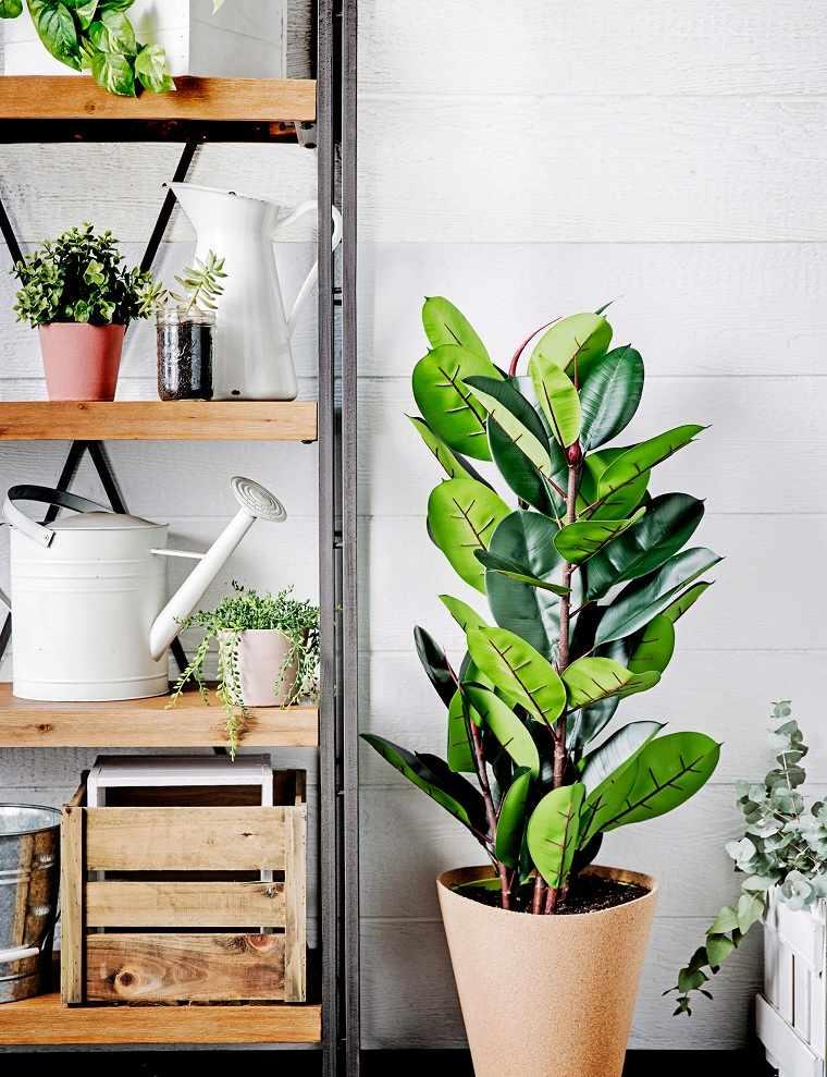 bellas-plantas-bano-estilo