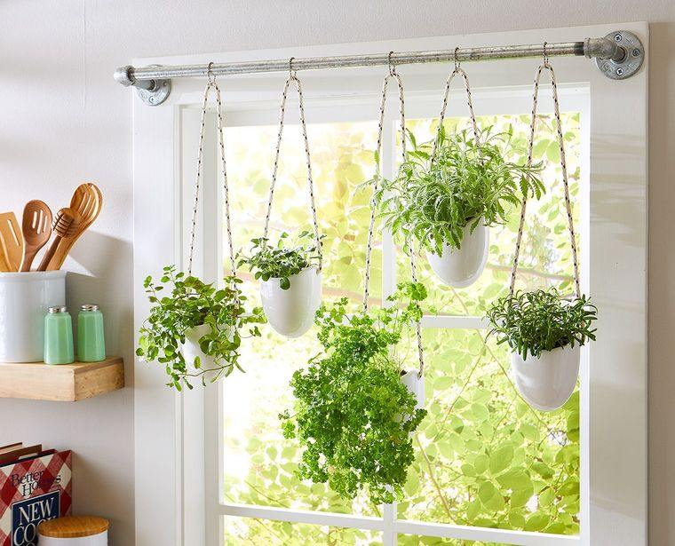 hierbas aromaticas frescas