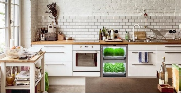 hierbas cocina contemporanea