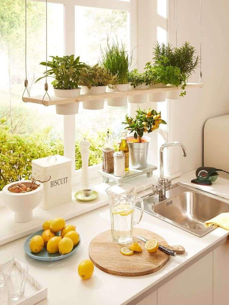 hierbas en cocina