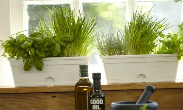 hierbas en ventana