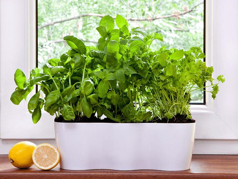 hierbas mini huerto cocina