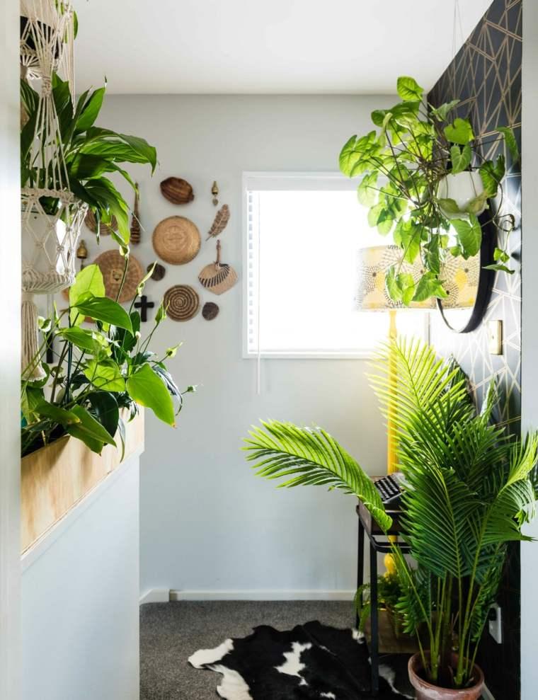 plantas en macetas-opciones-belleza