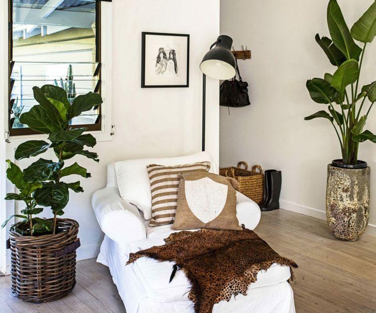 plantas-en-macetas-opciones-ideas