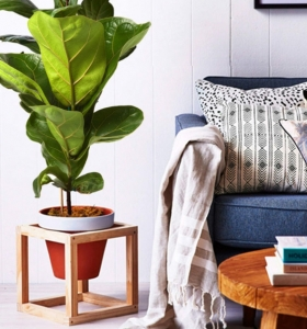 plantas-en-macetas-opciones-interior