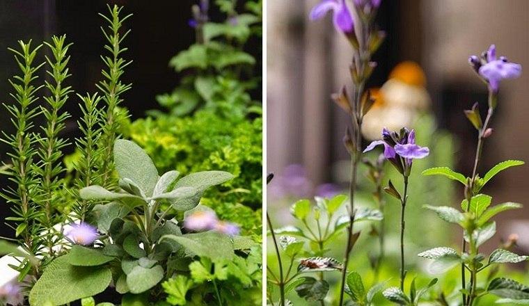 plantas-jardin-diseno-moderno