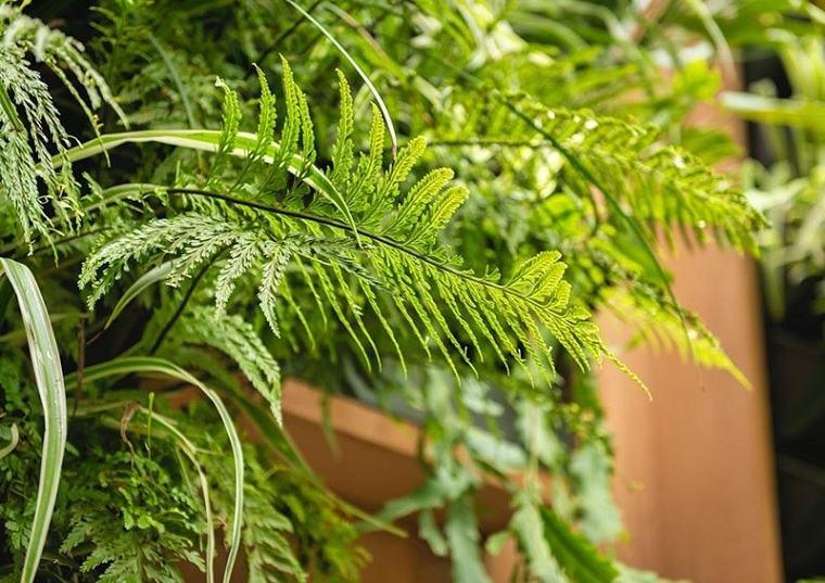 plantas-jardin-opciones-originales