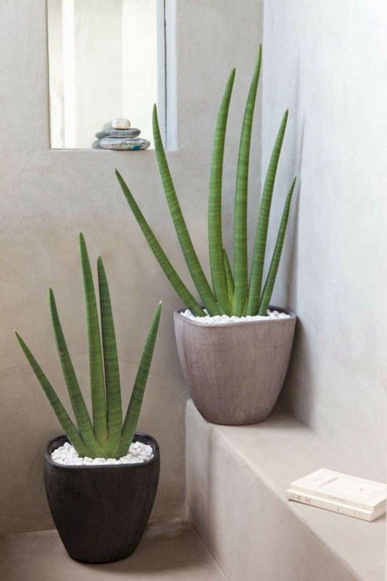 Plantas para el baño -aloe-vera-ideas