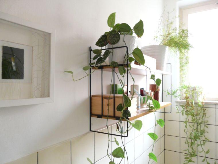 Plantas para el baño -pared-estantes