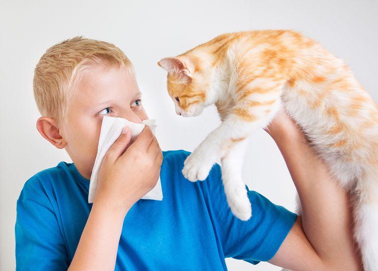 rinitis alérgica mascota