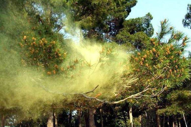 rinitis alérgica polen arboles