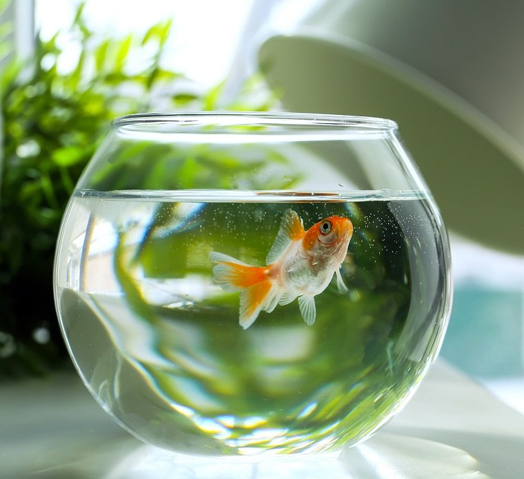 atraer la buena suerte-casa-peces