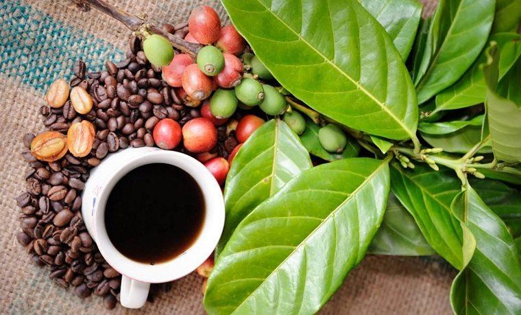 Cosmética natural-cafe-planta