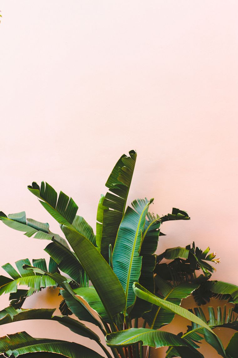 hojas-vcerdes-plantas-decoracion-plantas
