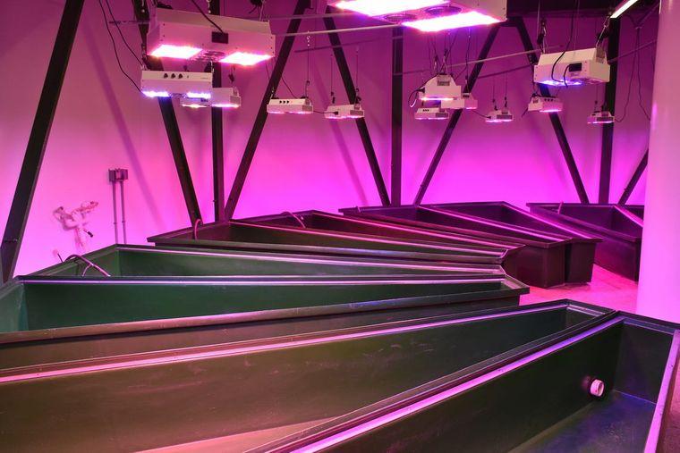 condominio subterraneo lamparas de cultivo