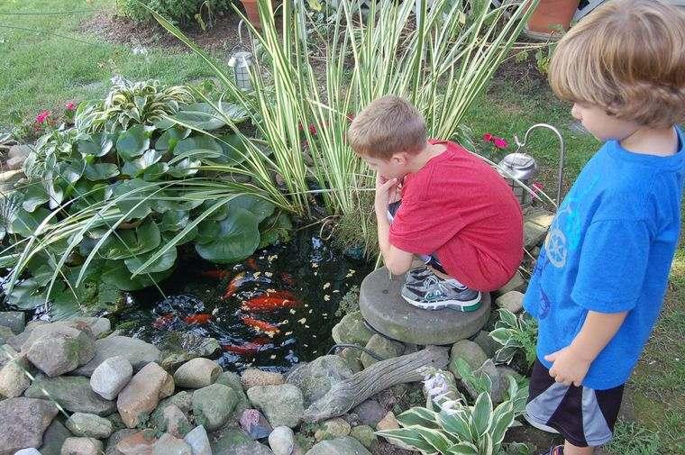 estanque con peces