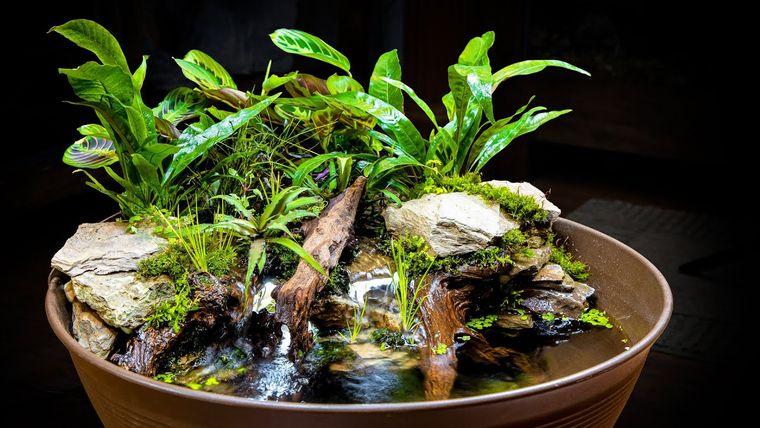 estanque decoracion