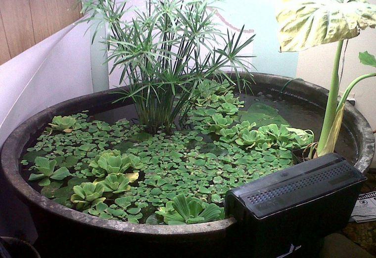 estanque plantas acuaticas