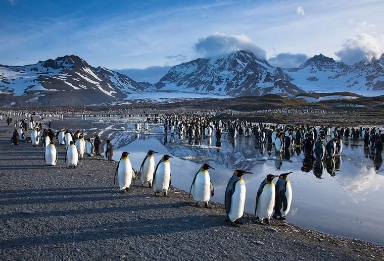 pingüinos-aves-estudio