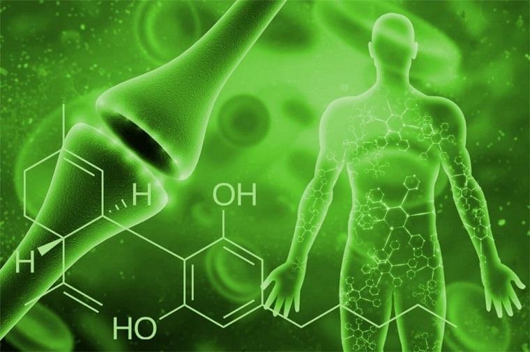aceite-cbd-como-funciona-cuerpo