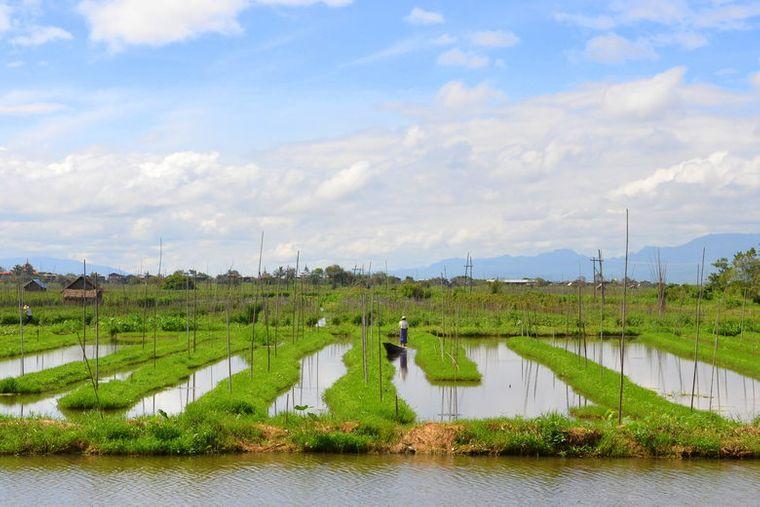 los jardines flotantes agua dulce