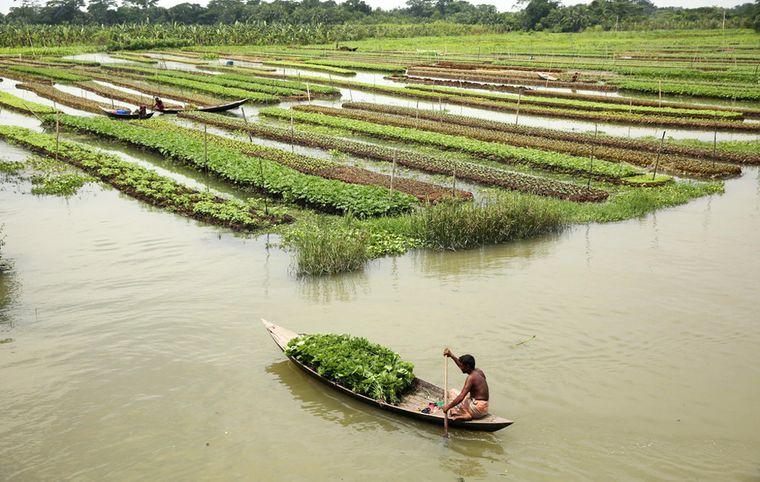 los jardines flotantes bangladesh
