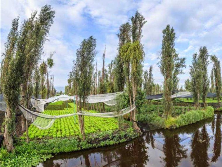 los jardines flotantes chinampa