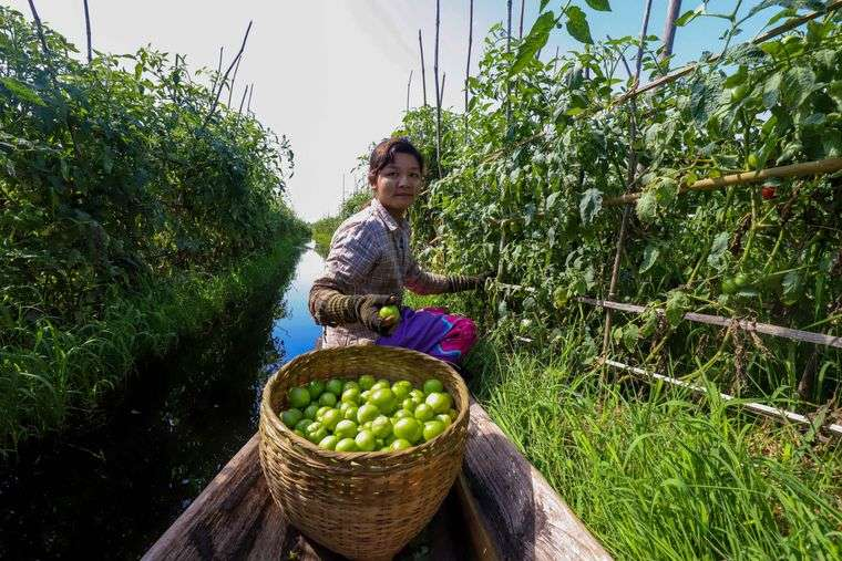 los jardines flotantes frutas
