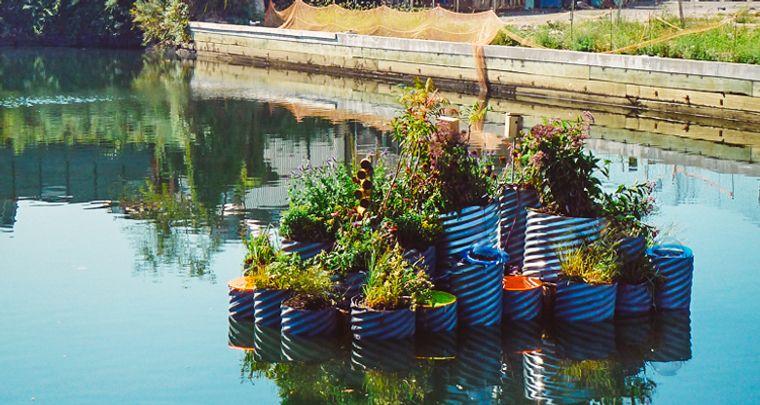 los jardines flotantes para purificar