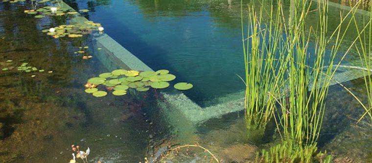 piscina natural diversas plantas