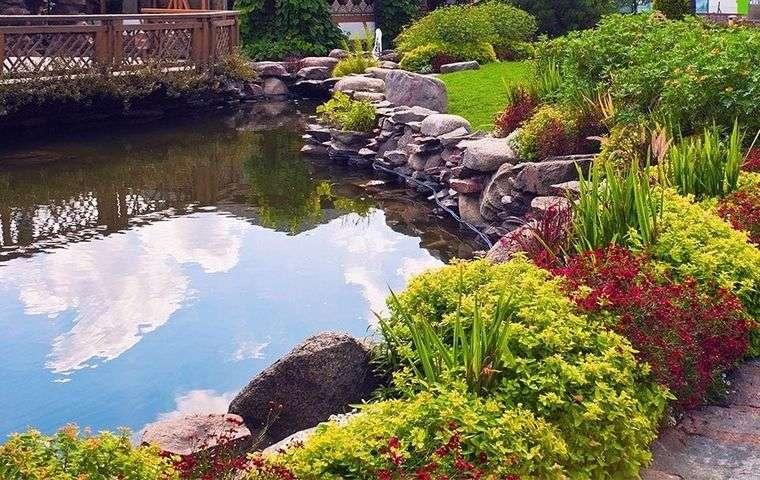 piscina natural plantas colores