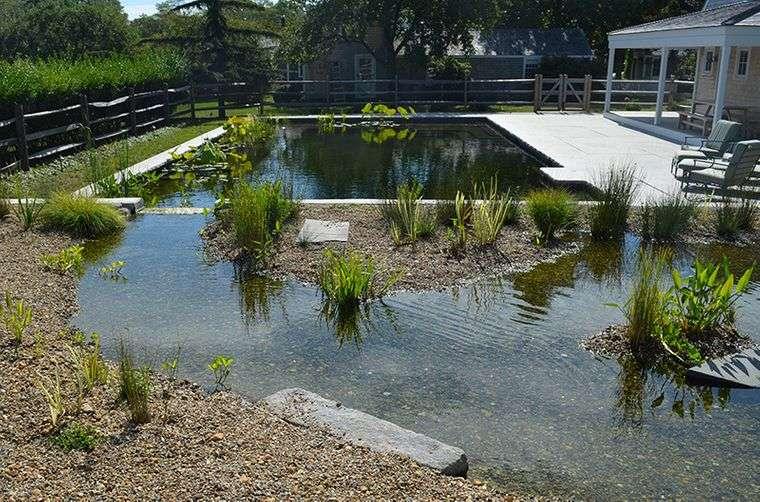 piscina natural plantas