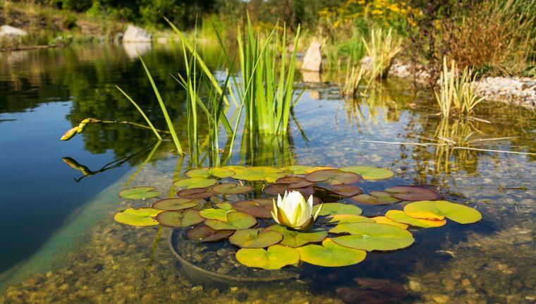 piscina natural vida planta