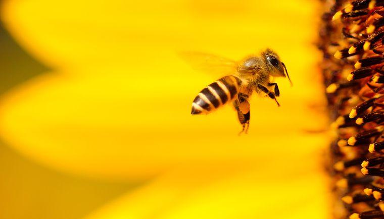 primeros auxilios abeja