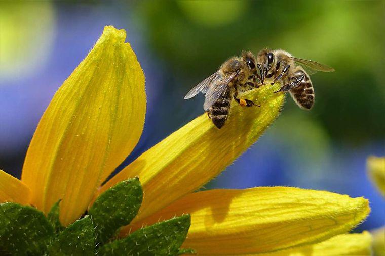 primeros auxilios abejas