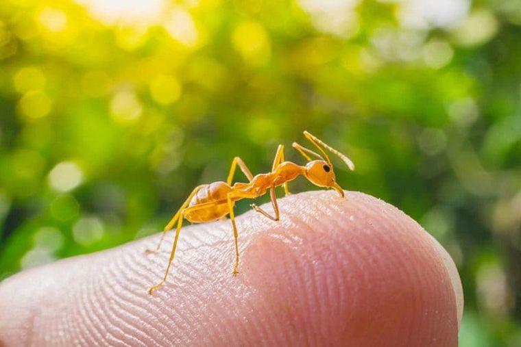 primeros auxilios hormiga fuego
