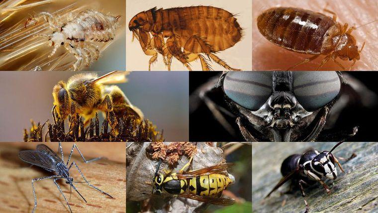 primeros auxilios insectos pican
