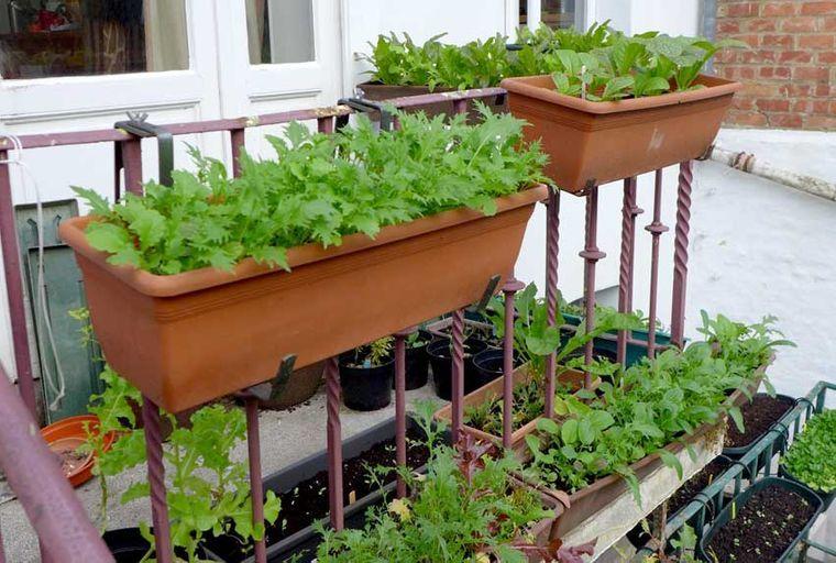huerto ecológico balcon