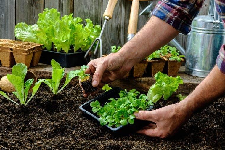 huerto ecológico beneficioso