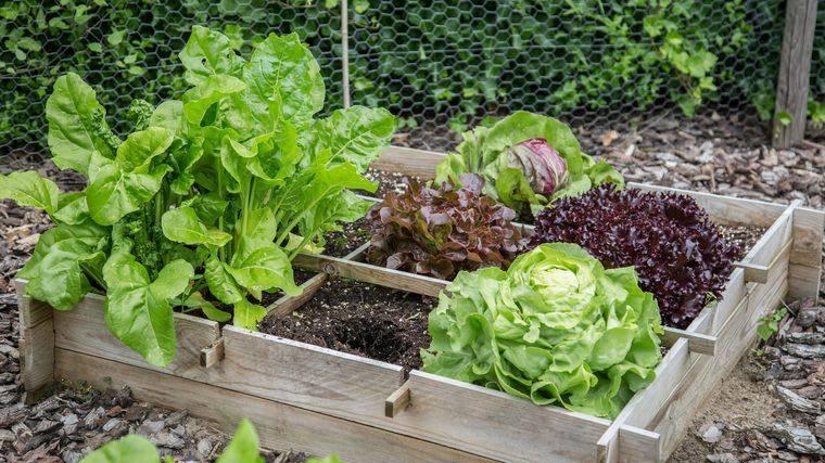 huerto ecológico caja vegetales