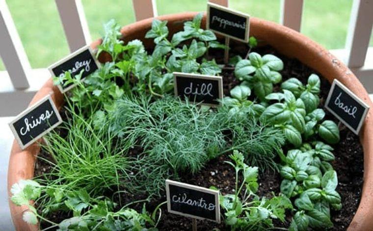huerto ecológico con hierbas
