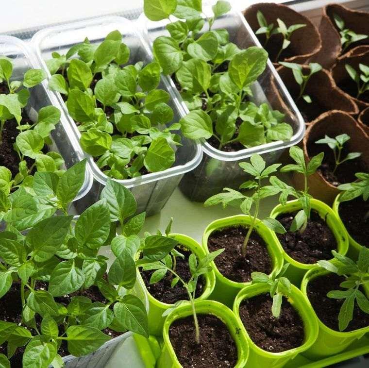 huerto ecológico con vegetales