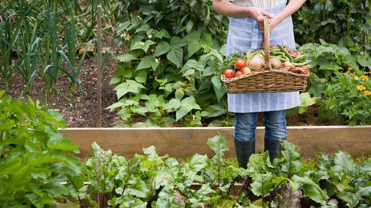 huerto ecológico cosecha